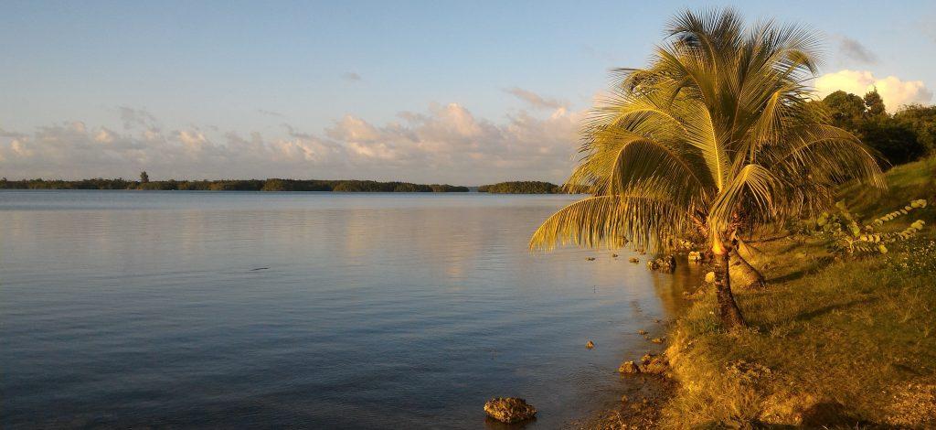 Blick in die Mangroven